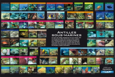 Poster Faune ss marine